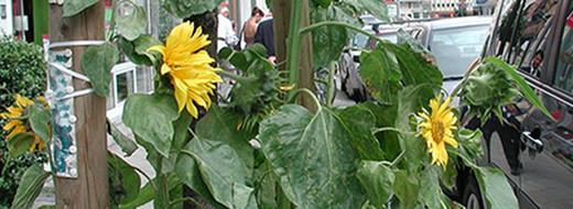 Guerilla Gardening Bild von Brusselsfarmer2 www.flickr.com